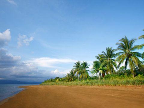 palm trees along a beach