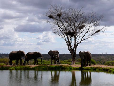 elephants around lake