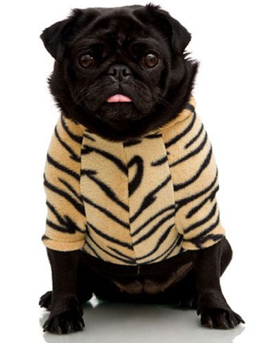 stylish pets in costumes