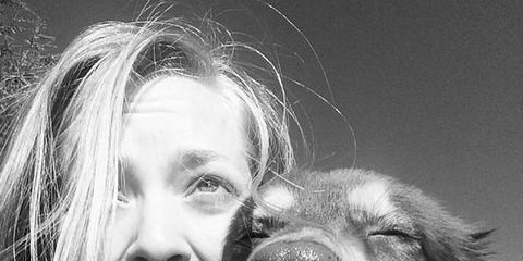 Dog breed, Lip, Dog, Mammal, Carnivore, Tooth, Facial expression, Iris, Jaw, Tongue,