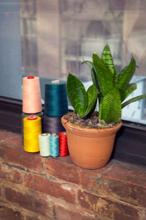 Flowerpot, Colorfulness, Houseplant, Annual plant, Cylinder, Paint, Plastic, Herbaceous plant, Plant stem, Brick,