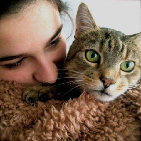 Skin, Vertebrate, Whiskers, Felidae, Carnivore, Cat, Small to medium-sized cats, Mammal, Iris, Fur,