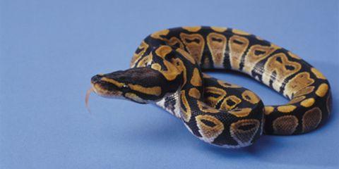 Reptile, Organism, Vertebrate, Scaled reptile, Terrestrial animal, Adaptation, Iris, Amphibian, Snake, Beauty,