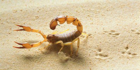 Scorpion stings and spider bites