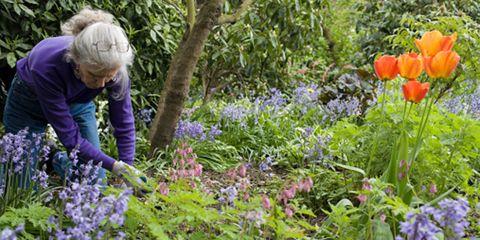 Plant, Flower, Garden, Purple, Shrub, Wildflower, Botany, Flowering plant, Groundcover, Lavender,