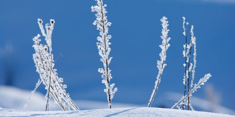 Branch, Blue, Winter, Daytime, Twig, Freezing, Ice, Snow, Electric blue, Slope,