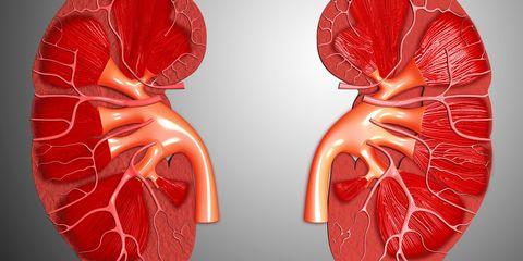 Red, Human anatomy, Organ, Carmine, Coquelicot, Nerve, Blood vessel,