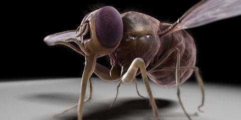 Invertebrate, Organism, Insect, Arthropod, Pest, Beauty, Adaptation, Macro photography, Light, Organ,