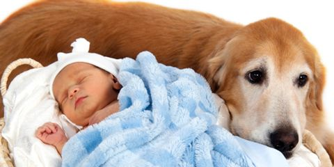 Pets, pregnancy and your baby