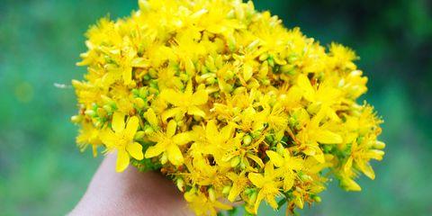 Yellow, Flower, Flowering plant, Petal, Woody plant, Shrub, Subshrub, Pollen, Forb, Mimosa,