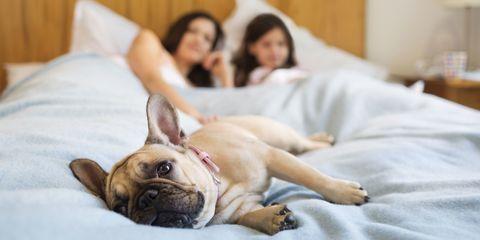 Human, Comfort, Skin, Dog, Dog breed, Room, Carnivore, Vertebrate, Mammal, Bed,