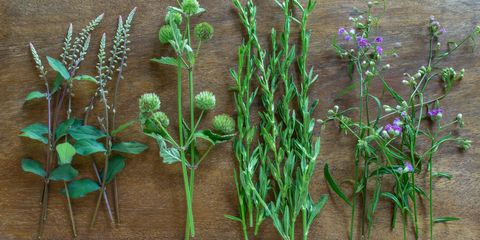 Plant stem, Flowering plant, Herbaceous plant, Perennial plant, Herb,