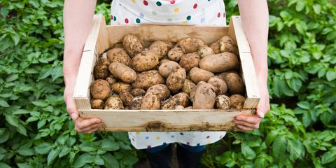 Woman holding box of muddy potatoes outdoors in vegetable patch