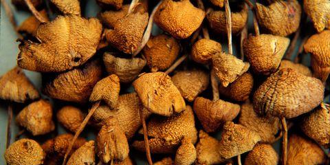 Magic mushroom drying out