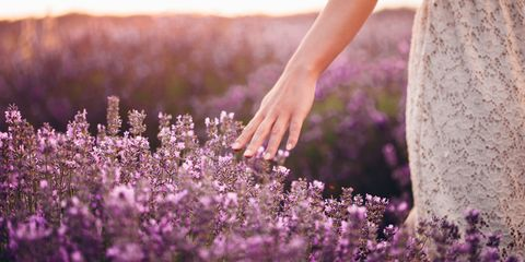 Woman running hand through lavender outside