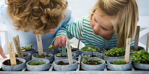 Children looking at mixed potted seedlings