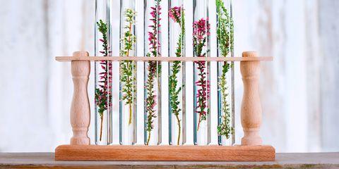 Herbs in test tubes - herbal medicine