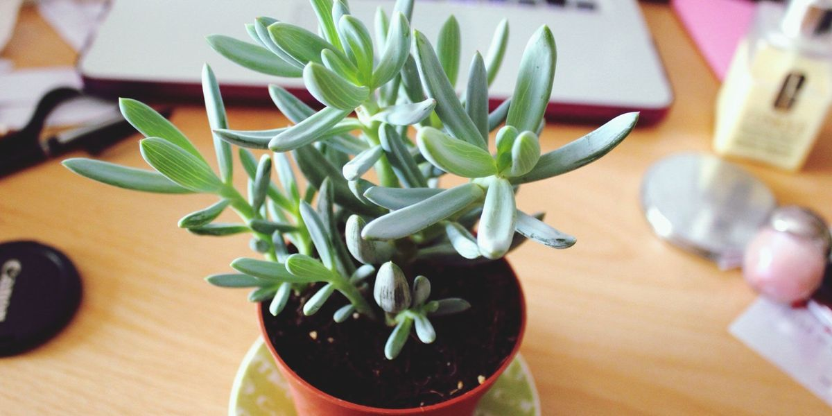 5 ways a desk plant can improve your health at work