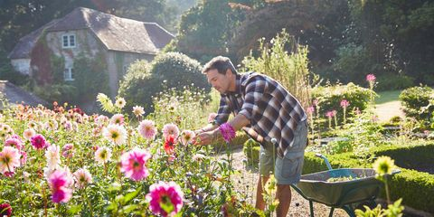 This is what spending one hour in the garden does to your body