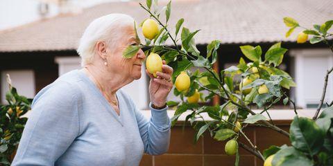 Senior woman smelling lemon of her lemon tree