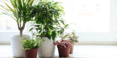 15 houseplants that have amazing health benefits