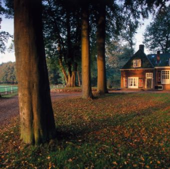 Tree, House, Leaf, Woody plant, Home, Land lot, Deciduous, Trunk, Residential area, Cottage,