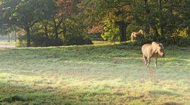 Nature, Grass, Natural landscape, Natural environment, Green, Leaf, Landscape, Nature reserve, Pasture, Sunlight,