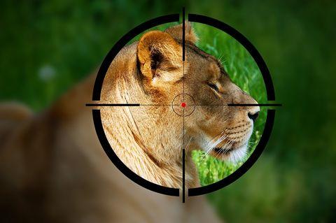 Wildlife, Felidae, Bengal tiger, Whiskers, Snout, Carnivore, Big cats, Terrestrial animal, Lion, Cougar,