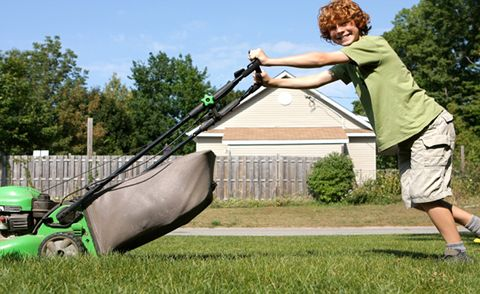Lawn, Grass, Mower, Lawn mower, Vehicle, Play, Yard, Landscape, Plant, Garden,