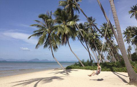Tree, Beach, Palm tree, Tropics, Arecales, Vacation, Caribbean, Woody plant, Ocean, Sky,