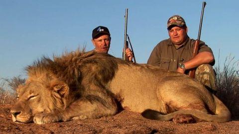 Lion, Skin, Vertebrate, Cap, Big cats, Felidae, Hat, Masai lion, Adaptation, Carnivore,