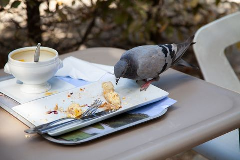 Bird, Coffee cup, Serveware, Cup, Table, Saucer, Tableware, Porcelain, Platter, Meal,