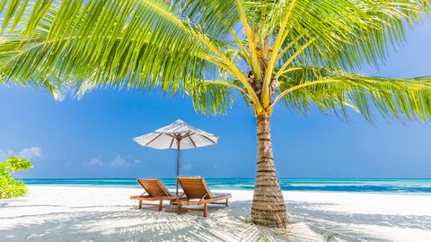 Vacation, Tree, Tropics, Palm tree, Caribbean, Arecales, Outdoor furniture, Natural landscape, Sunlounger, Resort,