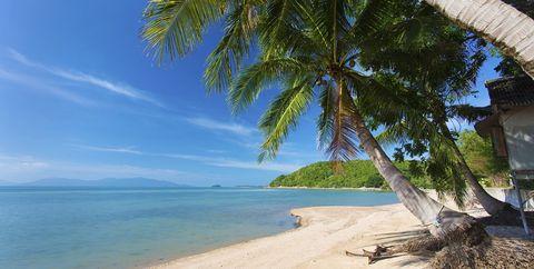 Tree, Tropics, Nature, Beach, Shore, Palm tree, Caribbean, Coast, Sea, Arecales,