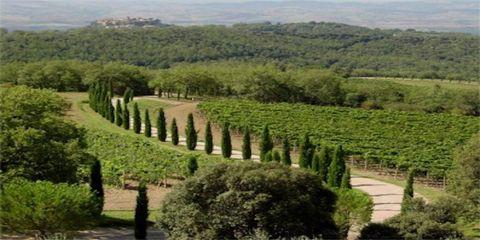 Natural landscape, Hill station, Vineyard, Tree, Plantation, Biome, Highland, Plant, Agriculture, Woody plant,