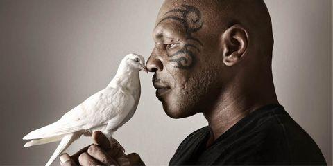 Bird, Beak, Parrot, Neck, Parakeet, Budgie, Pigeons and doves, Cockatiel, Rock dove, Cockatoo,