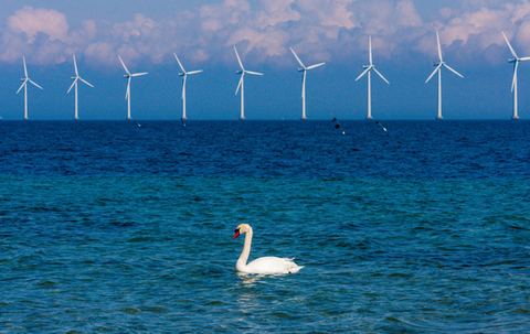 Wind turbine, Water, Wind, Wind farm, Water bird, Bird, Sky, Calm, Windmill, Wave,