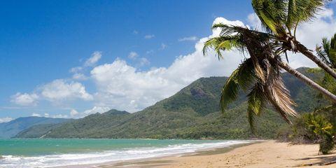Body of water, Tree, Tropics, Beach, Coast, Palm tree, Sea, Shore, Caribbean, Coastal and oceanic landforms,