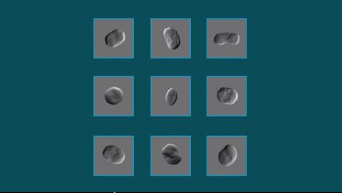 SLAC Imaged Bacteria