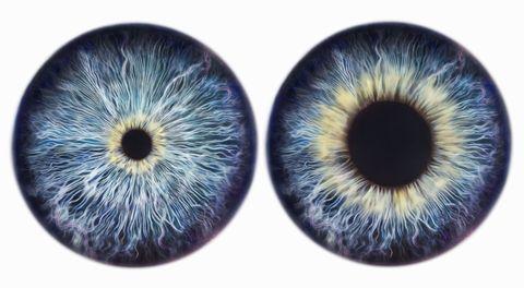 Colorfulness, Nature, Blue, Brown, Yellow, Organism, Photograph, Eyelash, Iris, Amber,