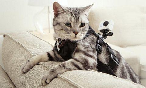 Xiami cat mount
