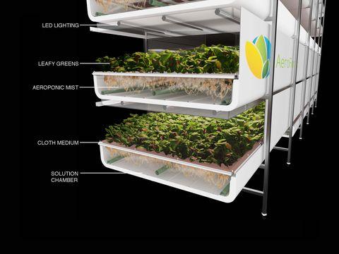 Terrestrial plant, Urban design, Transparent material, Plantation, Project,