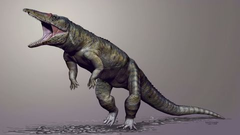 Organism, Dinosaur, Vertebrate, Jaw, Adaptation, Terrestrial animal, Organ, Black, Scaled reptile, Snapshot,