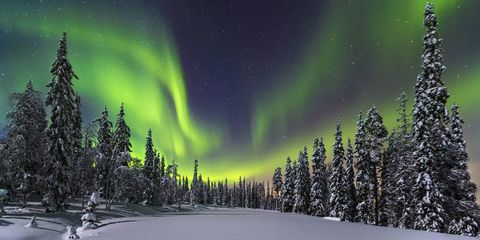 Aurora, Green, Natural landscape, Night, Woody plant, Winter, Space, Atmospheric phenomenon, Forest, Freezing,