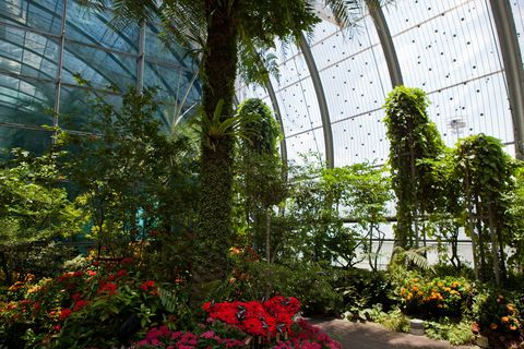Plant, Garden, Greenhouse, Shrub, Flower, Botany, Biome, Botanical garden, Daylighting, Annual plant,