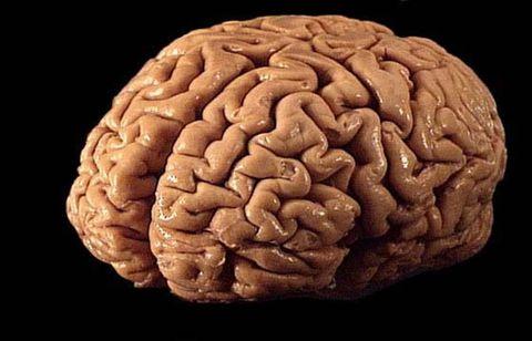 Brain, Brain, Organ, Chin, Human, Human body, Food,