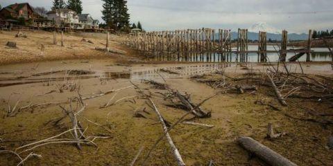 Draining a Lake Near Seattle Revealed This Bizarre Hidden Landscape