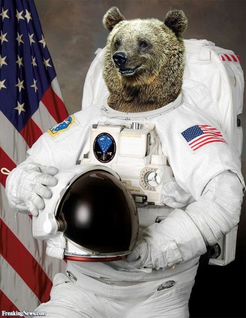 Astronaut, Flag, Bear, Space, Grizzly bear, Carmine, Carnivore, World, Aerospace engineering, Flag of the united states,