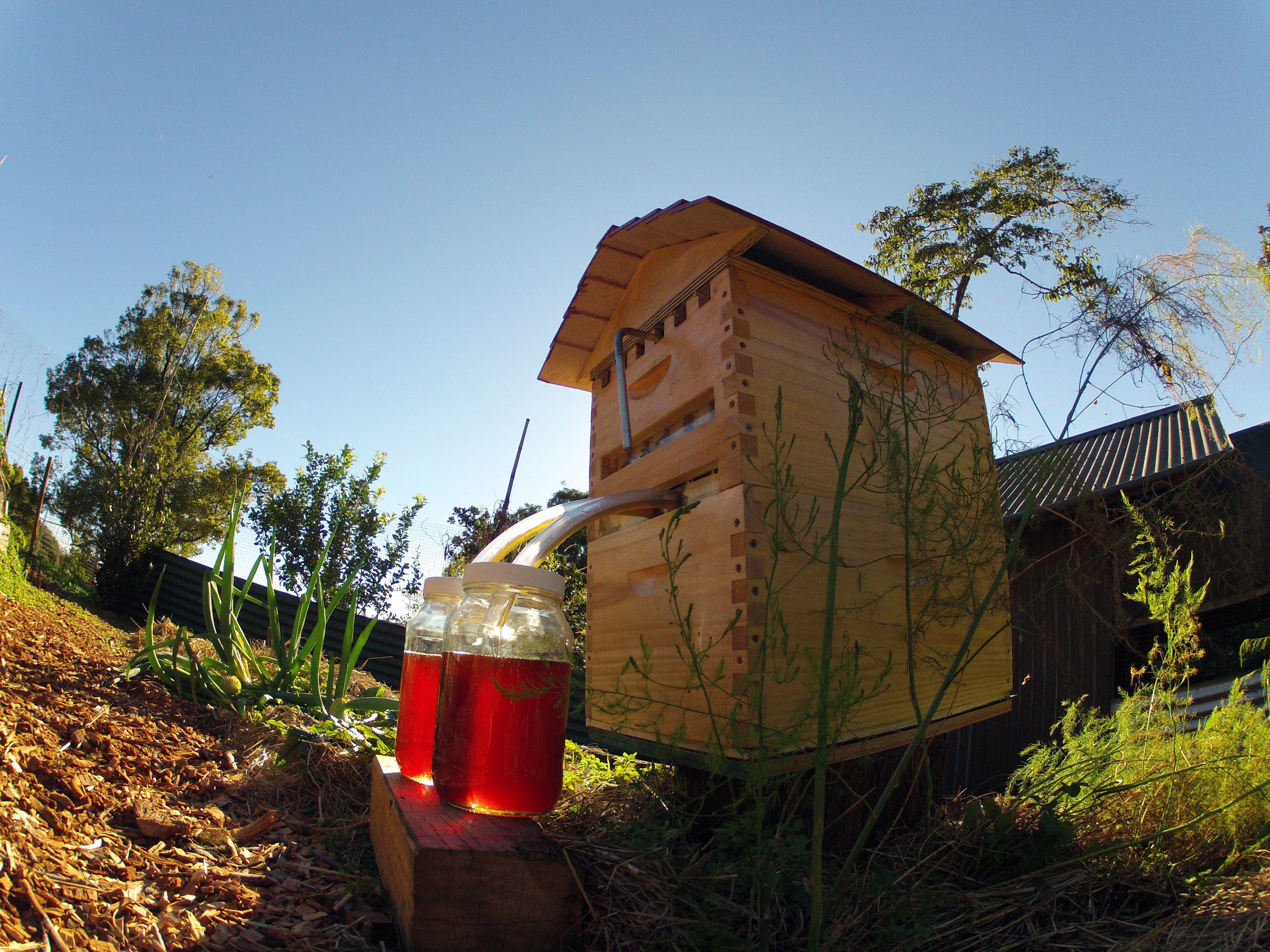 This 'Honey on Tap' Beehive Design Just Raised $9 Million on Indiegogo