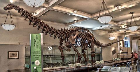 Dinosaur, Extinction, Bone, Skeleton, Ceiling, Fossil, Jaw, Electricity, Light fixture, Museum,
